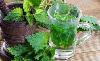 Крапива - одно из старейших веществ фитотерапии